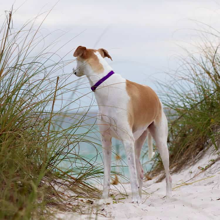 Fabulous Norfolk Dog Friendly Self Catering Holiday Cottages